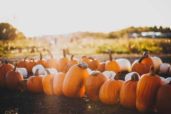 7 Tips to Make the Most of Fall